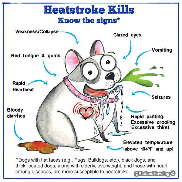 heatstroke canine.jpg