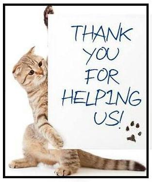 cat thank you_edited.jpg