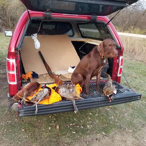 Camridges Rustic Hunter
