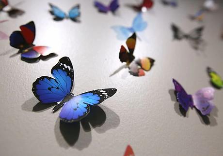 butterfly .webp