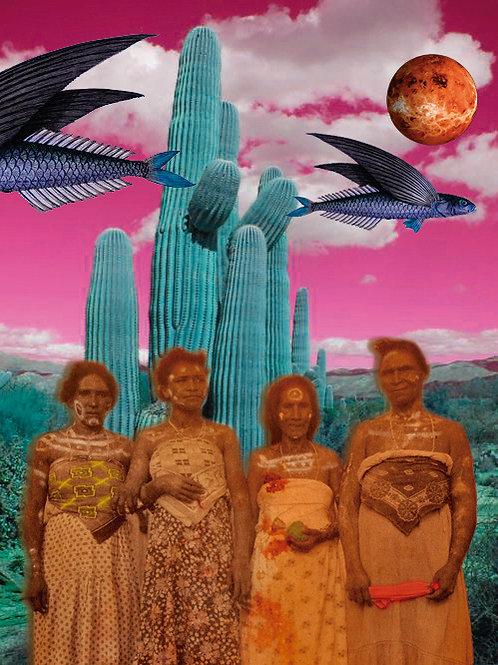 As mulheres apanhadoras de umbu