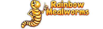 mealworms and insects for sale