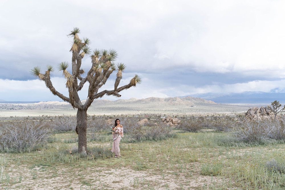 Birdesmaid stands under a large Joshua Tree wearing a pale blush lace dress and holding a large boho boquet.