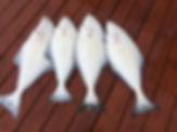 Craig Alaska Charter Fishing