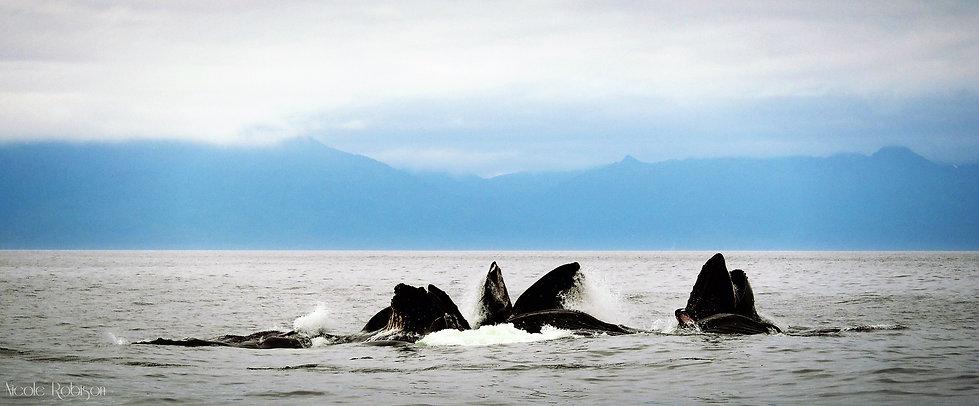 Craig Alaska Fishing Charter Alaska Wide Open Charters