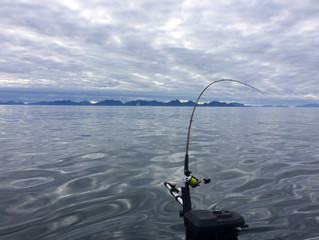 In search of Coho