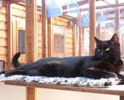 Cat-on-sunning-shelf-495x400