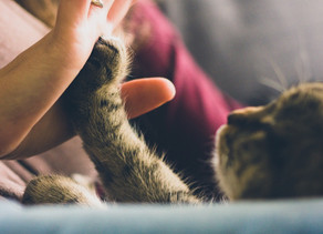 Paws for thought – why having a 'pet-nuptial' agreement is the ultimate separation preparation