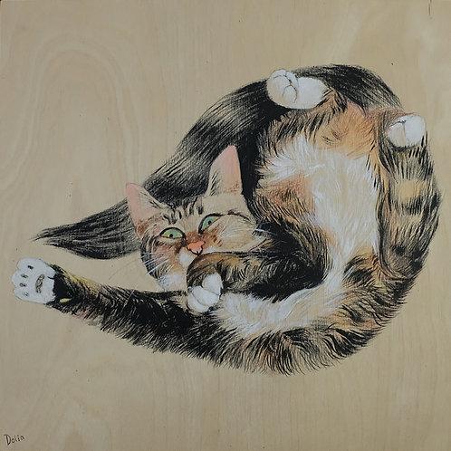 Cat November