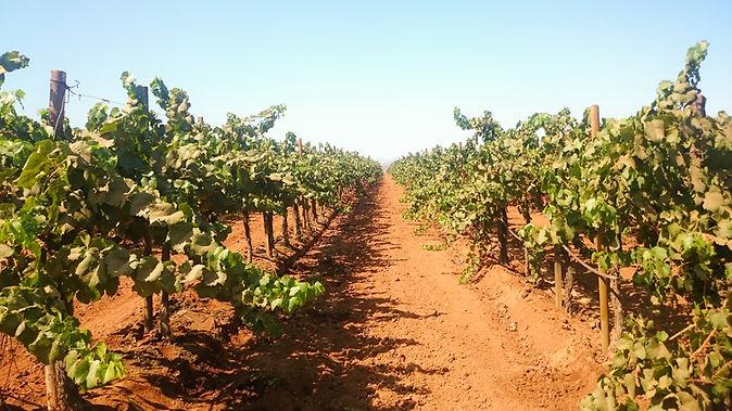Bodegas de Vinos Mexicanos