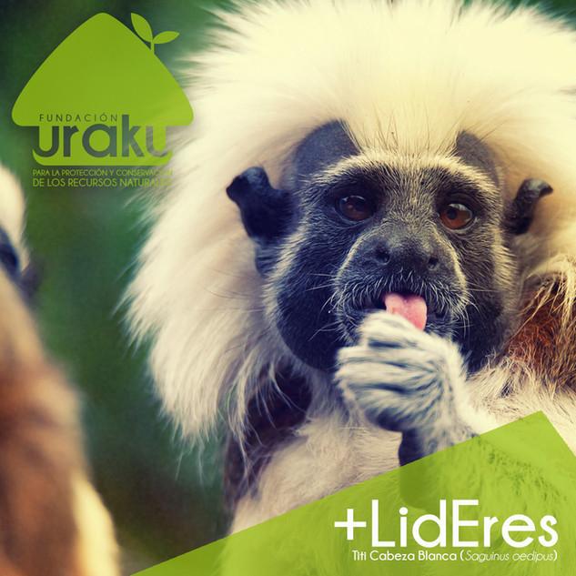 +LidEres1