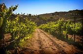 Categoria por región de vinos mexicanos