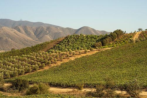Vinos Mexicanos Por Región