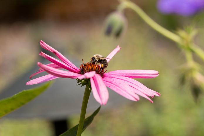 Bee Friendly!