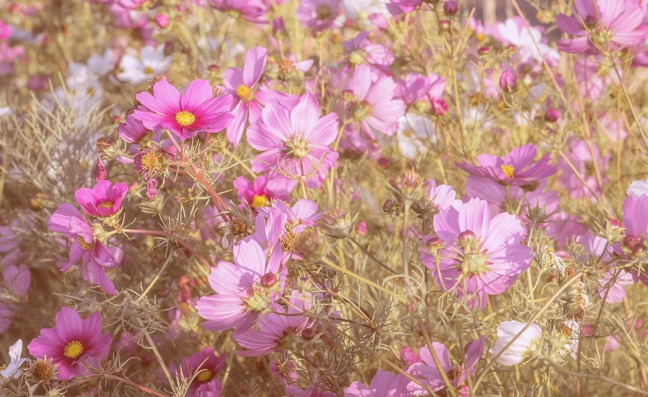 Blumen_rosa.jpg