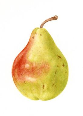 Williams Pear
