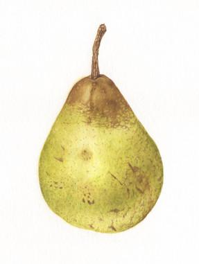 Rocha Pear