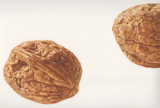 Enlarged Walnuts