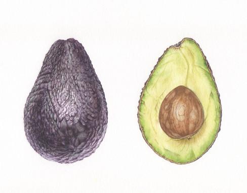 Hass Avocado Study