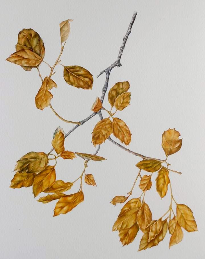 Dried Cork Leaves