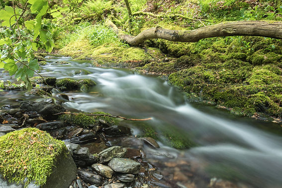 Lydford gorge, National trust by Paul Norris photo