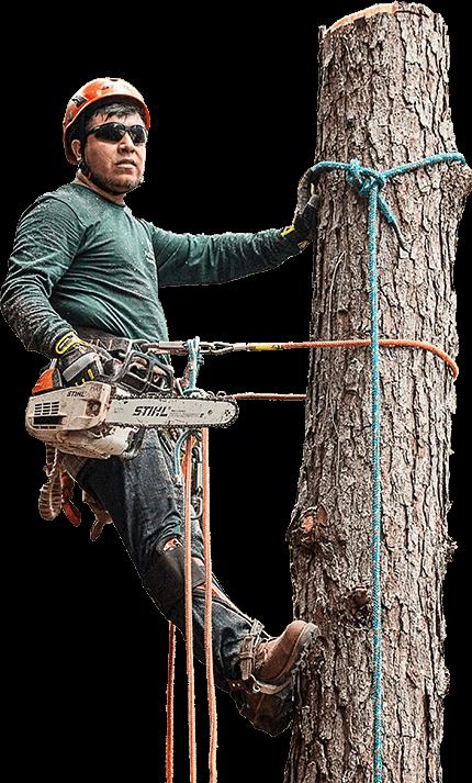 tree-man.png