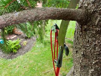 Pruning.png
