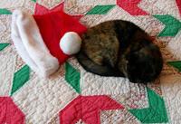 Annual Christmas Panic