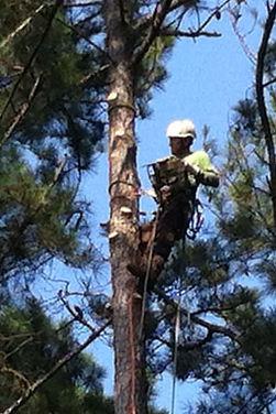 Tree_Climber_2.jpg