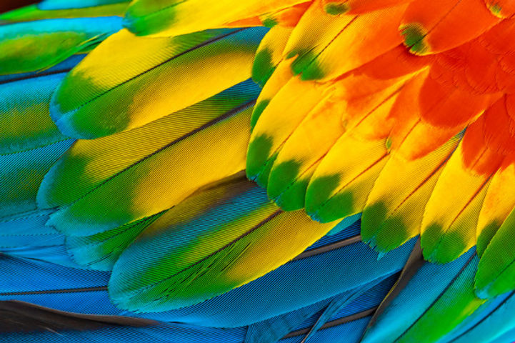 colorful-macaw-parrot-feathers-with-red-