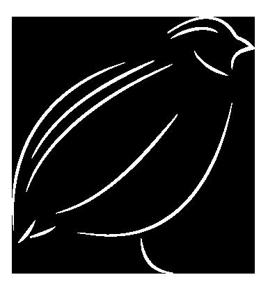 bird BG-10.png