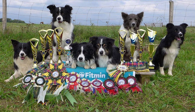 Fitmin dogs awarded