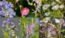 Flowers MIX_edited.jpg