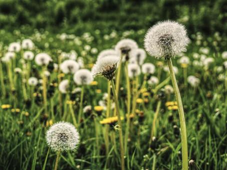 Առակ:  Խլածաղիկները
