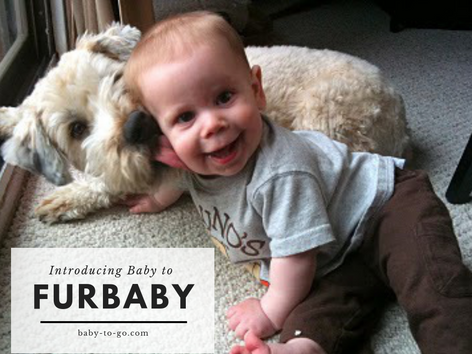 Introducing Baby to Furbaby