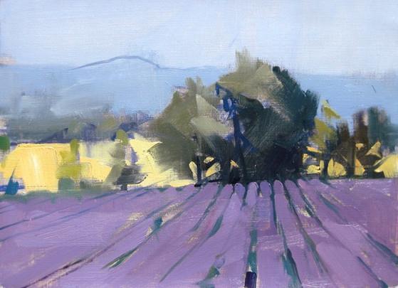 Lavender D, 2018