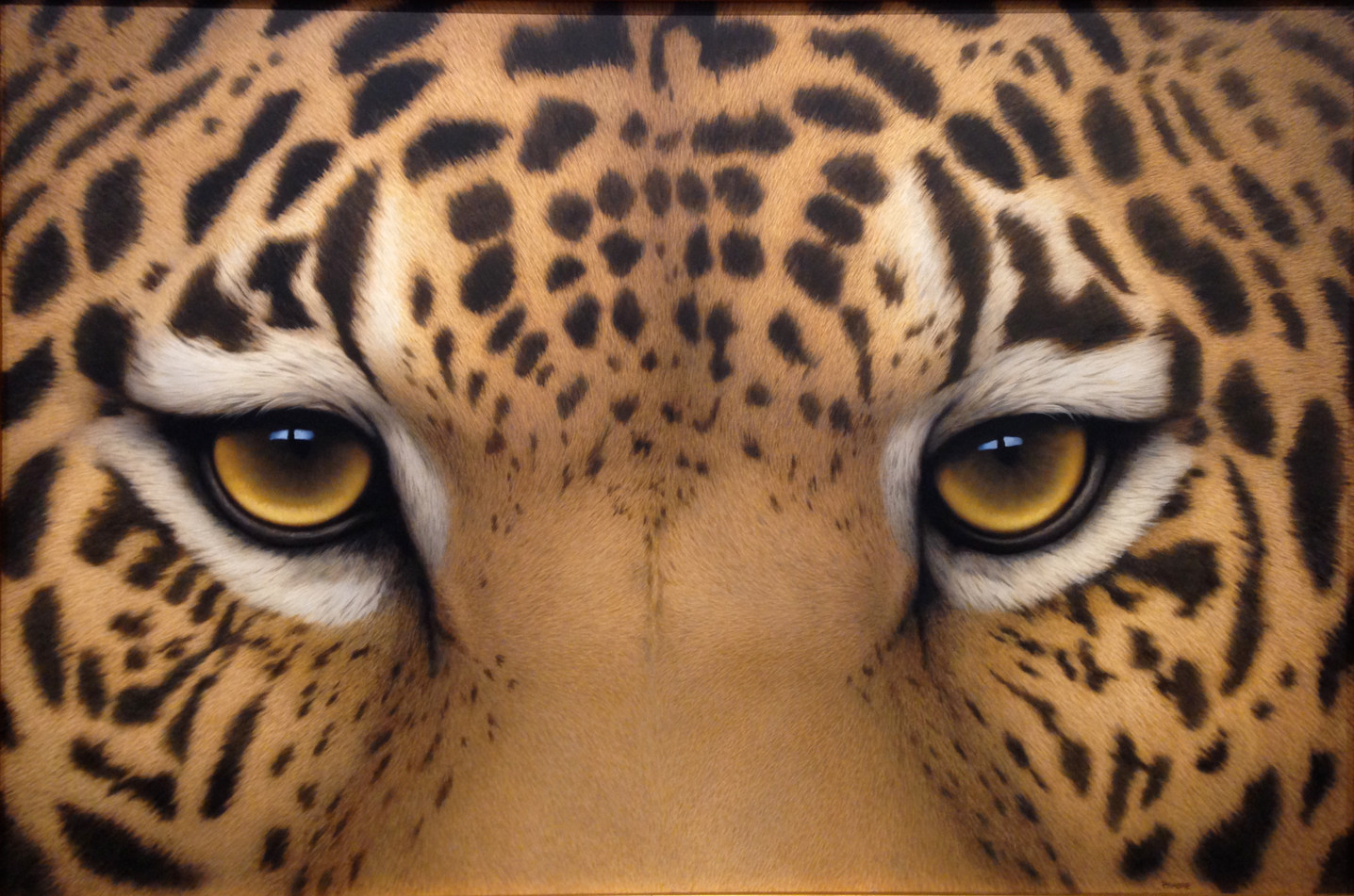 """Jaguar Eyes"""