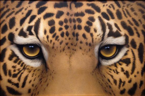 """Jaguar Eyes"""