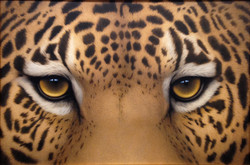 Jaguar Eyes, 2016