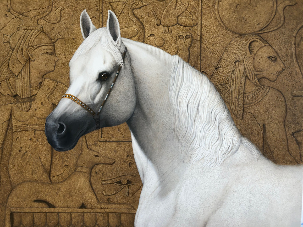 """Arabian Stallion"""
