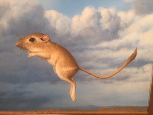 """""""Kangaroo Mouse"""""""