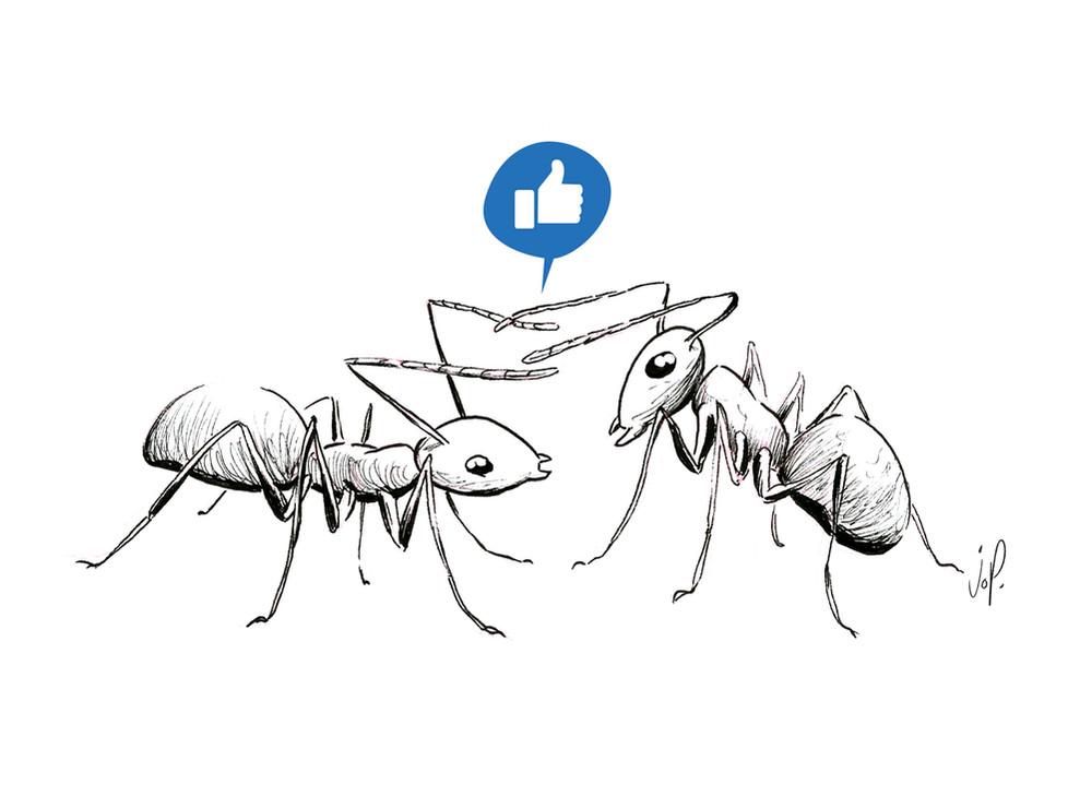 communication-fourmis.jpg