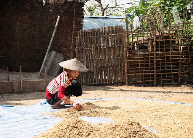 Drying Rice In Northern Laos
