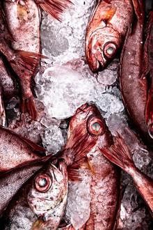 Fresh Fish In Vaikom Market, Kerala, Southern India