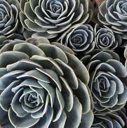 12-03-08-desert-plant-426859__480.jpg
