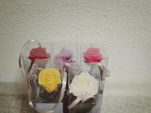 Rosa preservada ,en caja
