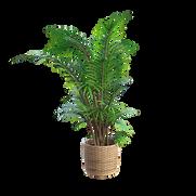 plantas bellas