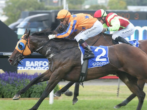 NEWS | Avantage all class in Sistema Railway victory at SkyCity New Year's Day Races