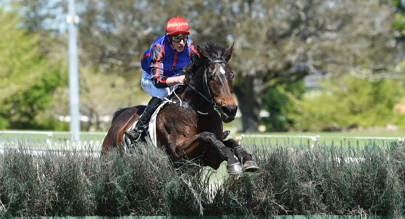 Shaun Fannin and Magic Wonder on their way to victory in the 2020 Great Northern Steeplechase at Ellerslie