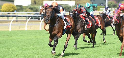 Feature race winners from Auckland Racin